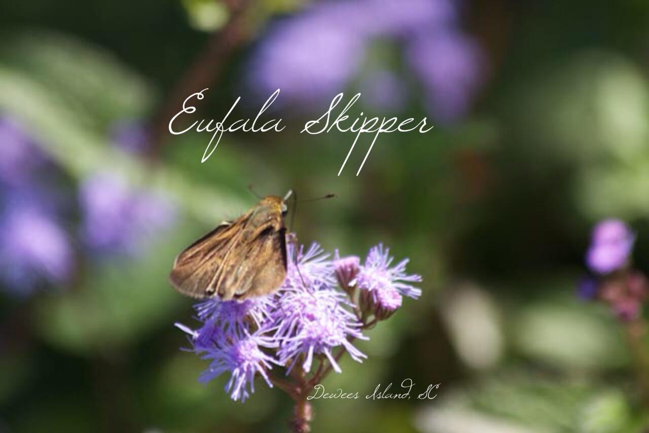 Eufala skipper