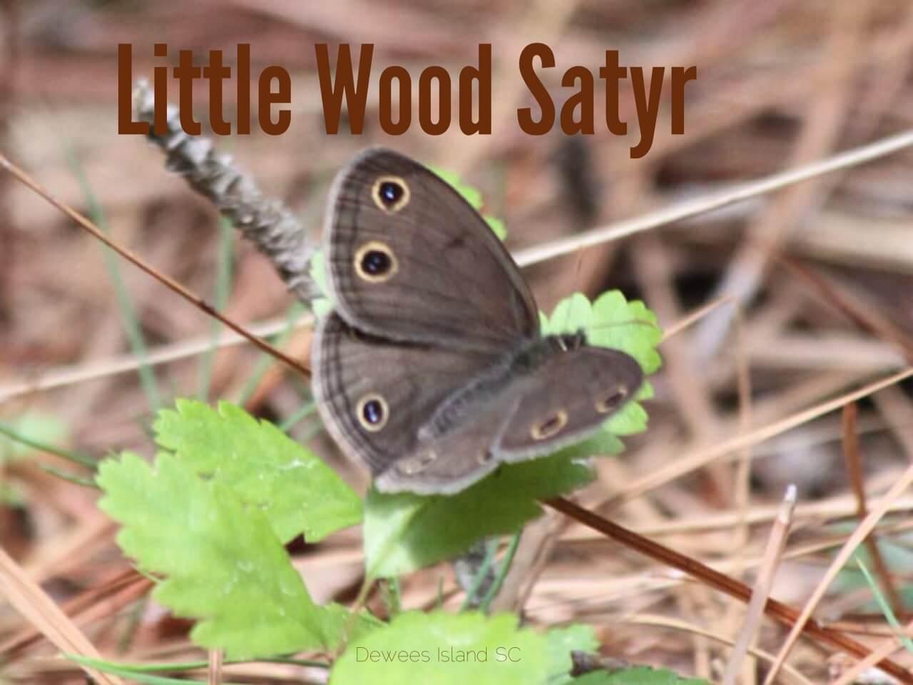 woodsatyr