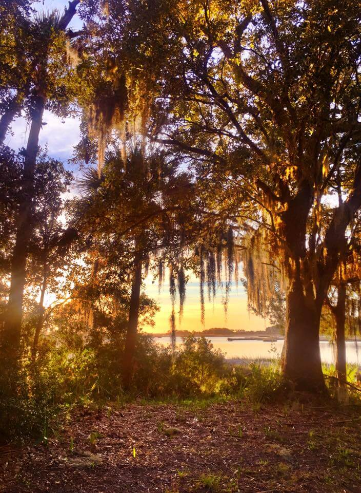 live oak with moss in sunset Dewees Island