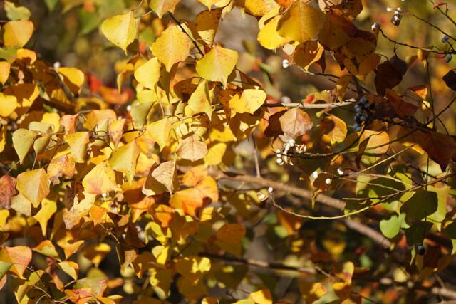 Fall colors, Judy Fairchild