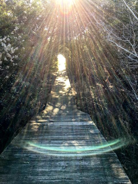 Rays on the walkway, Bill Sullivan