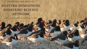 Dewees Island of International Significance to Shorebirds