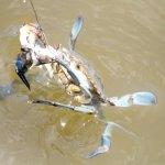 July program crabbing